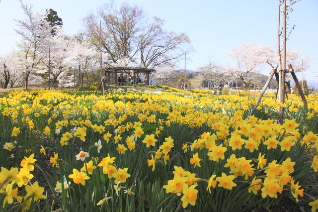 飯山城址公園