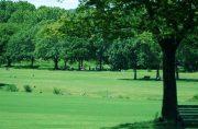 公園マイマイ蛾