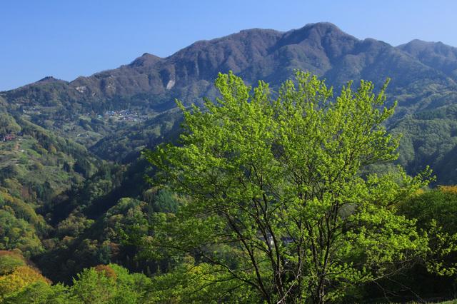 長野市中条の新緑と虫倉山