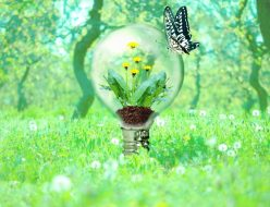 窓や電球に集まる虫