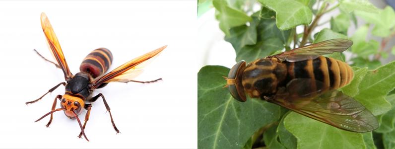 虫除けクリーンは塗った面に虫が止まり接触することで神経系に影響を与え、虫が不快に感じることで、寄り付きにくくなります。