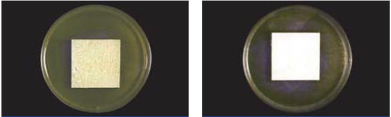 防藻性能試験結果より(試験方法:JIS Z 2911 準拠)左写真が一般塗料、右写真がパーフェクトトップ
