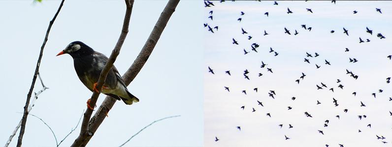 鳥でお困りではありませんか
