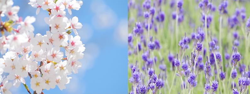 「ハナコレクション」をご活用いただき、お好きな「花の彩り」で囲まれた「セレブレーションな彩色生活」を楽しんでみてはいかがでしょうか?
