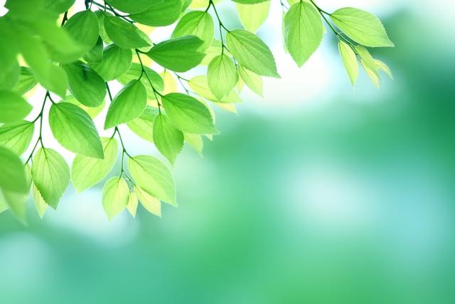ガイナは遠赤外線により室内にマイナスイオンを帯電させます。また室内のホコリやチリ、花粉などの汚染物質の浮遊を抑えます。