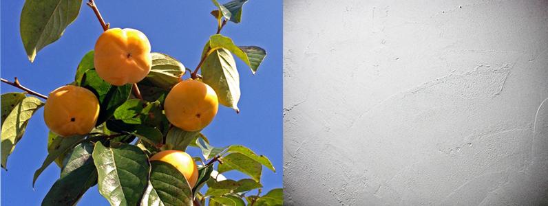 明治以前の塗装には日本独自ともいえる塗装「漆塗り」と「柿渋」が主に使用されてきました。