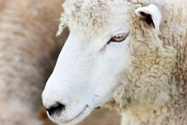 塗装で使用される刷毛は様々な動物の毛を使っていますtop