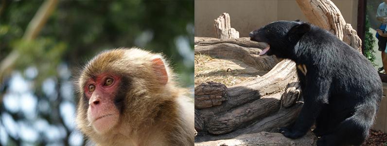 野生動物でも危険なクマと猿についての回避方法をお伝えします