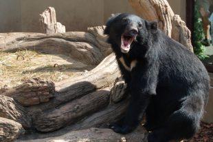 熊との遭遇