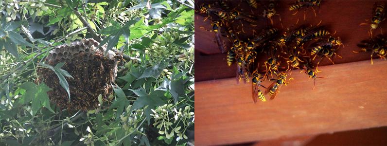 蜂の巣に気を付けましょう