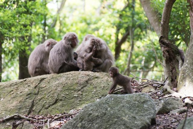 長野県猿の生息数