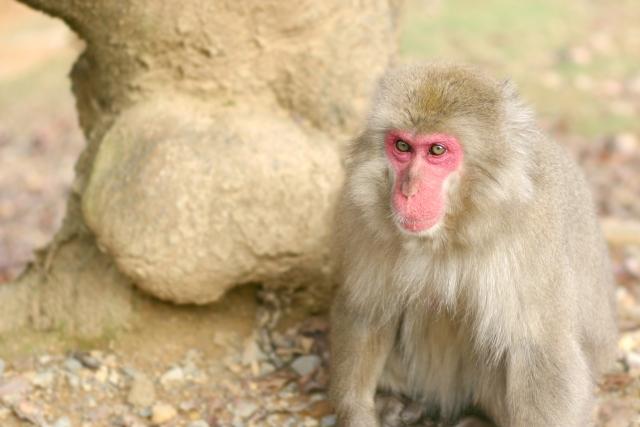 猿から身を守るために