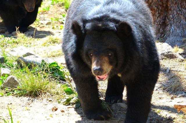 熊の出没情報