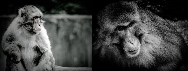 猿に出会った時の対応