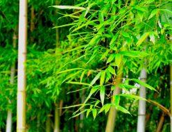 竹林の効果