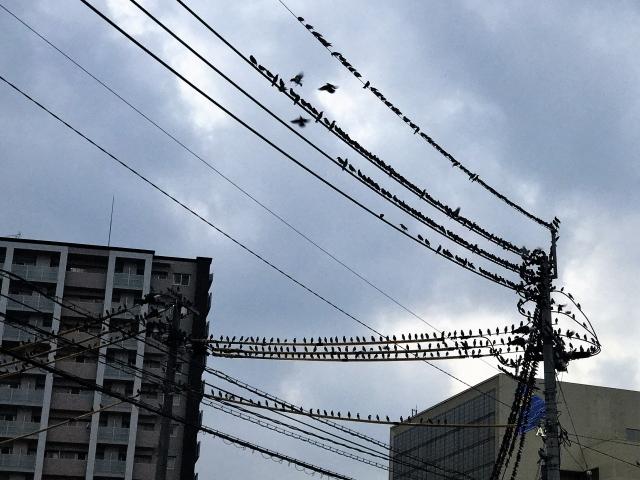 鳥や鳥のフンへの対策にはどんなことが有効か?『鳥害対策について』