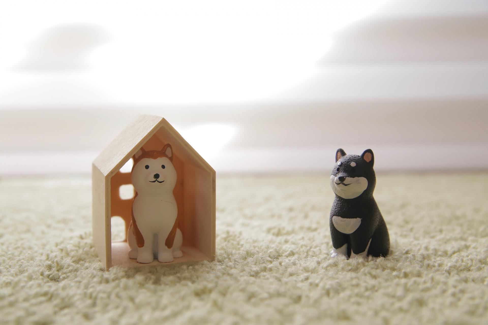 犬小屋塗装で解決! 犬のシックハウス症候群
