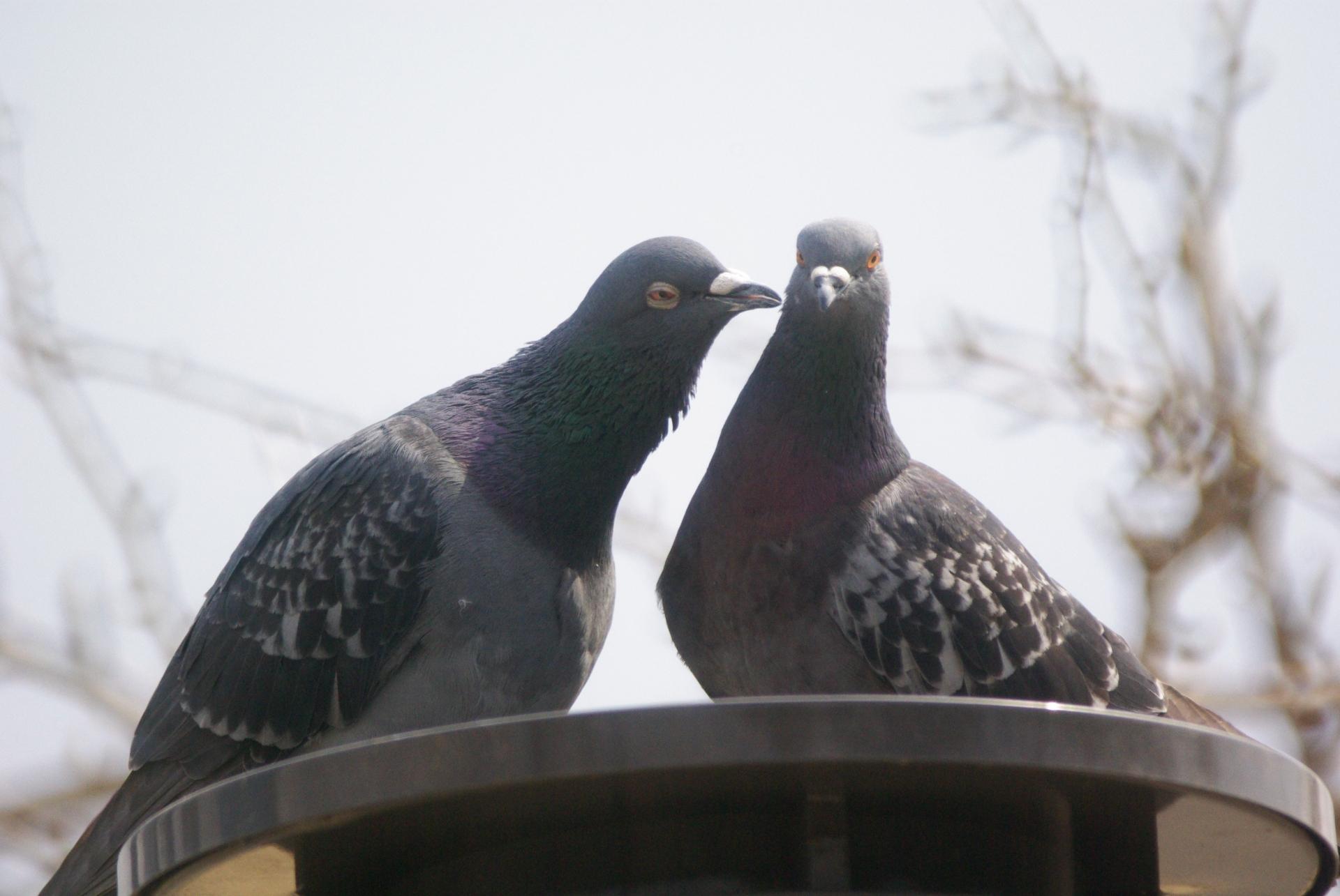 住宅のベランダや屋根に鳥が来て困る!対策になる忌避具と忌避剤とは!?