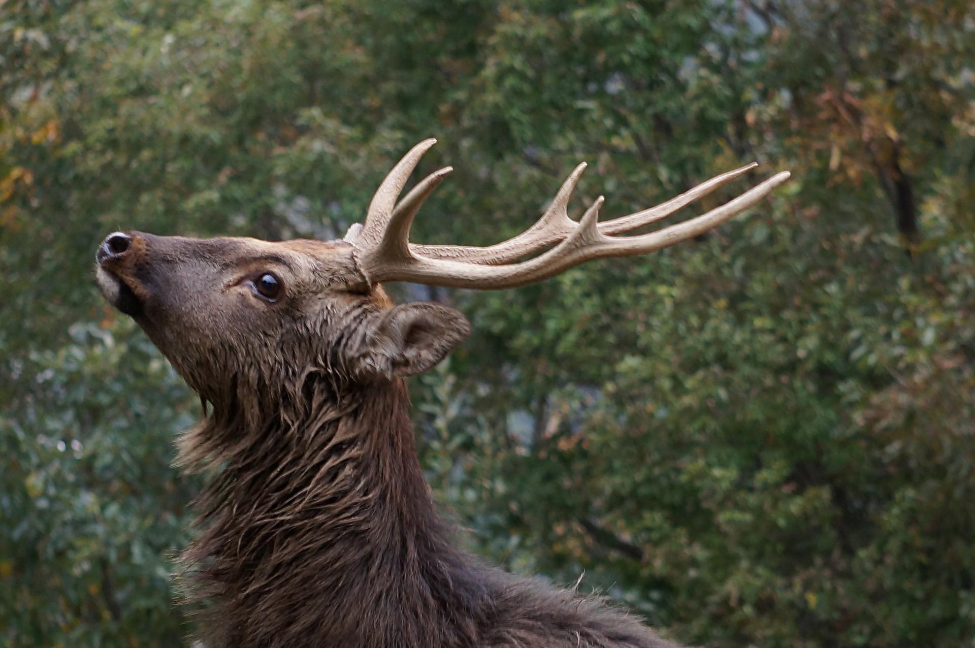 鹿教湯温泉の伝説とは