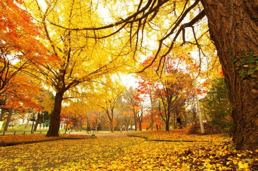秋に訪れたい長野の観光スポット③
