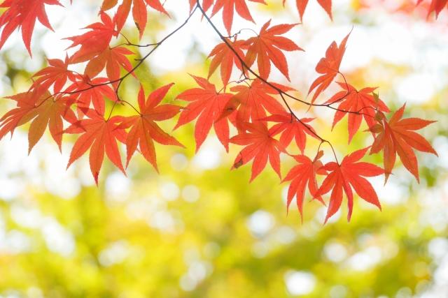 秋に訪れたい長野の観光スポット