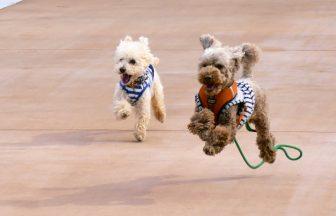 ペットにとってフローリングの滑りはなぜ危険!?改善できる方法とは