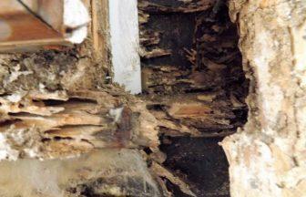 シロアリ・腐朽菌