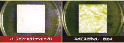 防藻性能試験結果